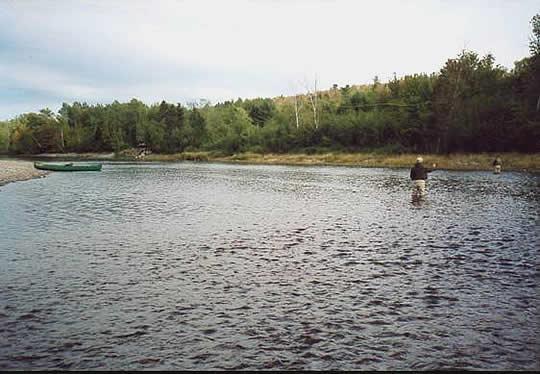 salmon-pool0026