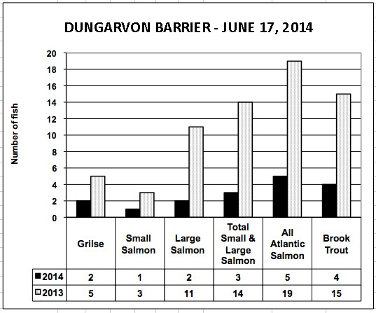 Dungarvon conting fence on the Southwest Miramichi has a long way to catch up even with the low 2013 numbers.