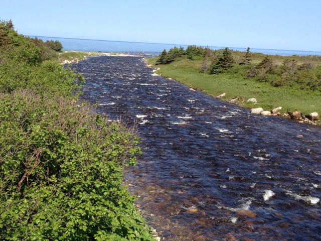 Baker's Brook, Gros Morne National Park, June 28, 2014 (photo Don Ivany/ASF)