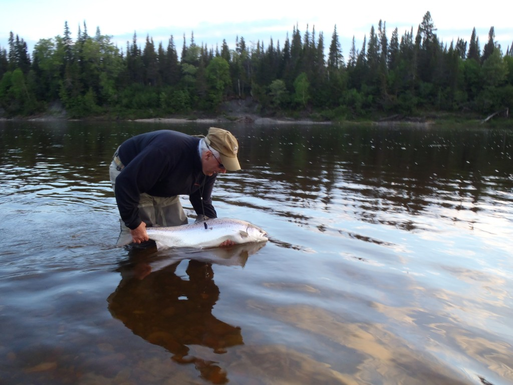 Christian Kirouac releases a female salmon estimated to be 25 lb., at St-Jean (North Shore) River on 17 June in the evening. Photo Leon Jackson