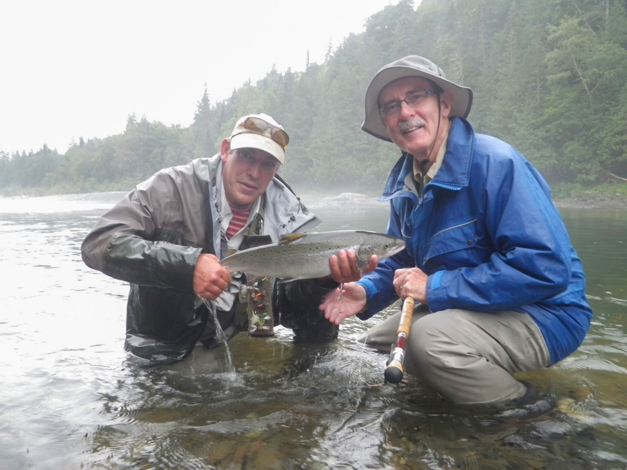 Mike Daly releases a grilse in the mist at Upper Limestone Pool on the Grand Cascapedia.
