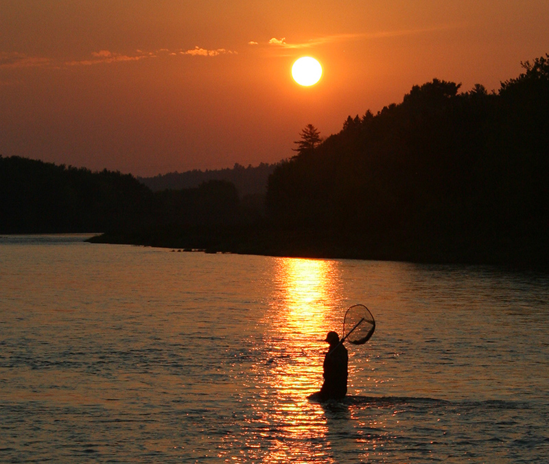 Guide wading in Southwest Miramichi, near sunset.
