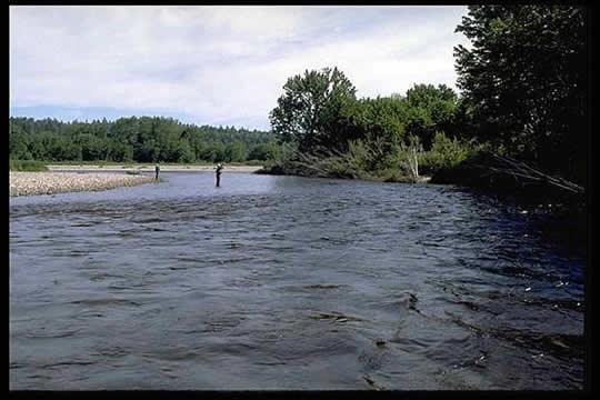salmon-pool008