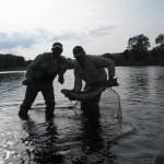 30-lb-fall-salmon