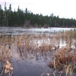 Cains River Flood