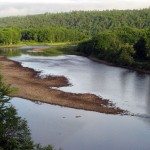 july-20-atlantic-salmon