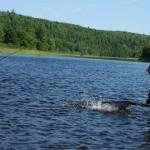 Landing Atlantic Salmon