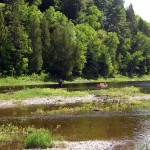 low-water-salmon