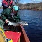 miramichi-big-salmon