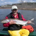 spring-atlantic-salmon