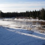 wildcat-march-2011