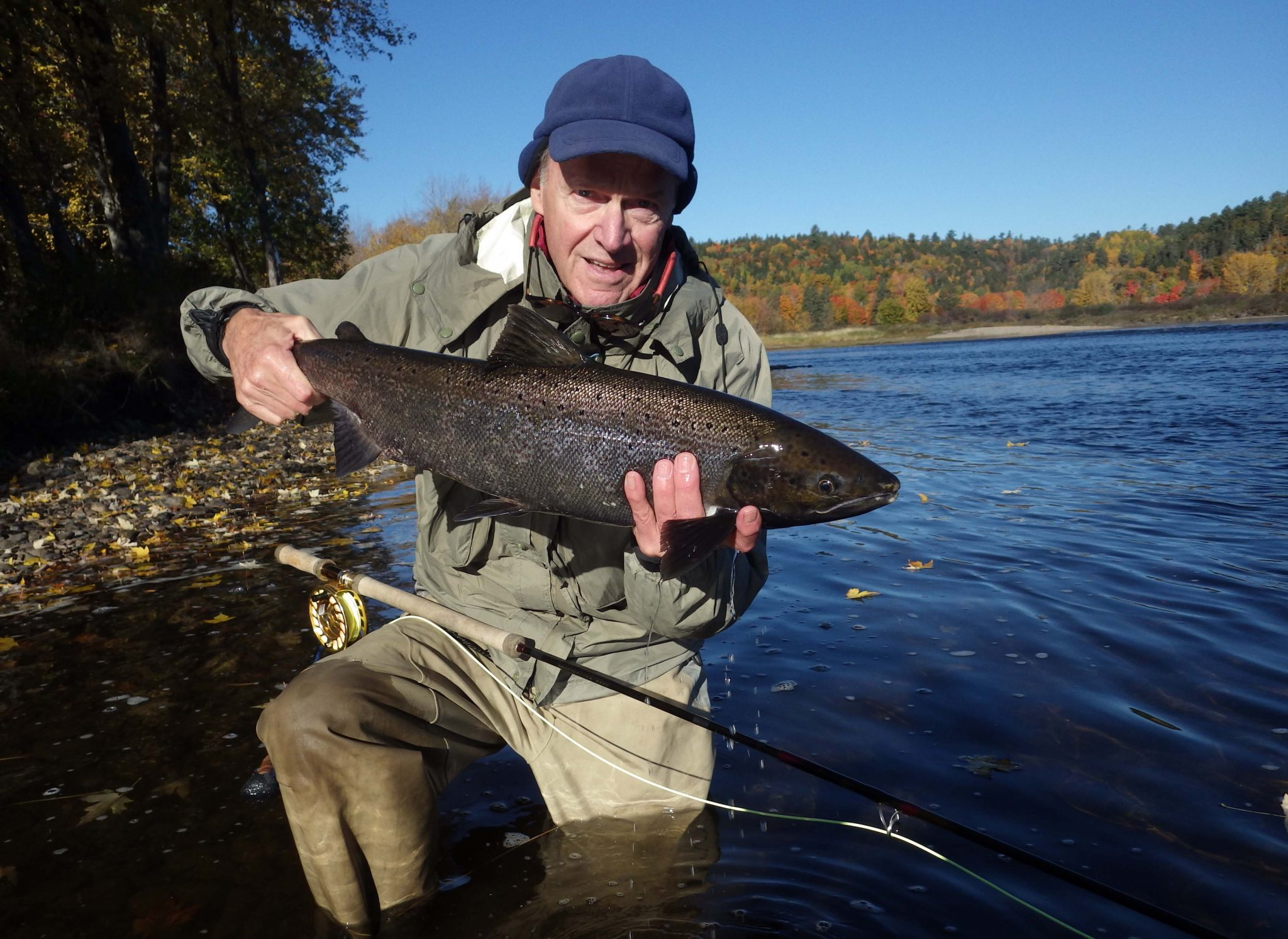 10.11.16. /></a> Wilson's Miramichi River Report for October 14th. We are wrapping up the 2016 season with perfect weather, low water and average fishing. J. Merritt is happy as he displays his beautiful fall salmon hked on his last day of fishing. I fished the Cains River on the 13th of October with good results as well, one 16 pound hook bill and a feisty 6 pound grilse. </p> <div class=